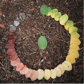 cycle de vie couleur feuilles en rond